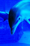 CLOSE UP DOLPHIN Royalty Free Stock Images