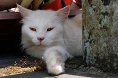 White cat resting in the shade. Close-up domestic animal sitting in the shade stock photos