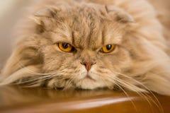 Close-up of domestic cat Stock Photos