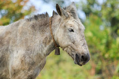 Close up of domestic horse head in thailand Stock Photo