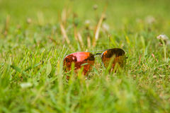 Close up dos óculos de sol em um gramado verde Fotografia de Stock