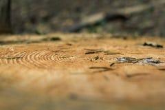 Close-up dos anéis de árvore Imagem de Stock