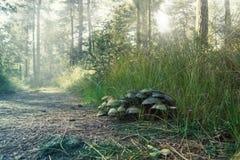 Close-up dos cogumelos Fotografia de Stock Royalty Free