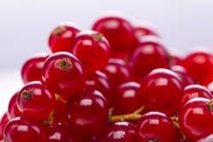 Close up dos corintos vermelhos no fundo branco Foto de Stock Royalty Free