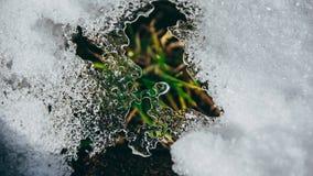 Close up dos cristais de gelo com grama imagem de stock royalty free