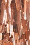 Close up dos escova-cursos do oilpainting fotografia de stock