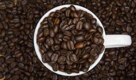 Close-up dos feijões de café Fotos de Stock
