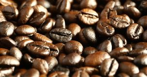 close up dos feijões de café 4k, matéria prima do alimento da cafeína das bebidas, feijão delicioso dos pratos video estoque