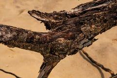 Close-up dos galhos torcidos enterrados na areia de Paraty Mirim fotografia de stock royalty free