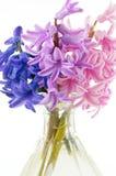 Close-up dos Hyacinths Fotos de Stock Royalty Free