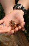 Close-up dos lagostins nas mãos fotografia de stock
