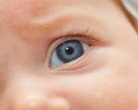 Close up dos olhos azuis recém-nascidos Fotografia de Stock Royalty Free