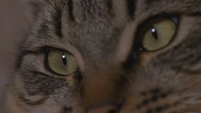 Close-up dos olhos de gato novos que olham a tevê vídeos de arquivo