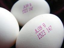 Close up dos ovos futuros Imagem de Stock Royalty Free