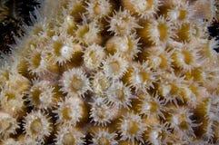 Close-up dos pólipos principais corais na ilha de Bonaire nas Caraíbas imagens de stock royalty free