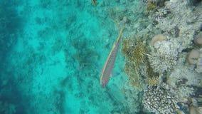 Close-up dos peixes corais video estoque
