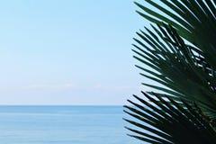 Close-up dos ramos da palma da árvore contra o mar do céu azul e do turguoise no dia em circunstâncias naturais fotografia de stock royalty free