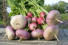 Close up dos vegetais de raiz Fotografia de Stock Royalty Free