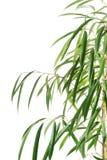 Close up on dracaena leaves Stock Photo
