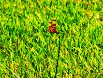 Dragon Fly resting on flower stem Stock Photo