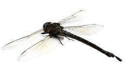 Close-up of dragonfly Royalty Free Stock Photography