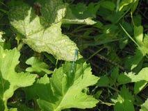 Close up dragonfly foliage Royalty Free Stock Photo