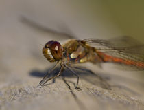 Close up of a dragonfly on a log Stock Photos