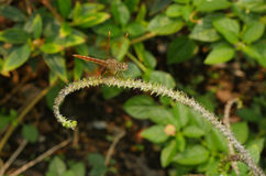 Close up dragonfly  Stock Photo