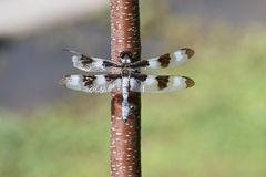 Close up of dragonfly Stock Image