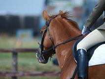 Close Up Of A Dressage Horse Stock Photography