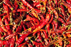 Close up of dried chilli Stock Images