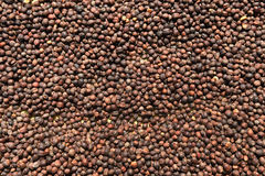 Close up of dried coffee beans Royalty Free Stock Photos