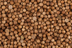 Close up of dried coriander seeds Stock Photos