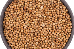 Close up of dried coriander seeds Royalty Free Stock Photos