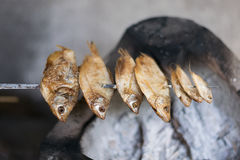 Close up Dried fish are grilled on stove Royalty Free Stock Images