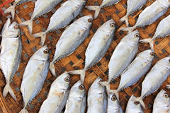 Close-up dried fish Stock Photography