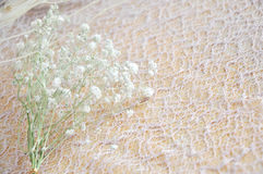 Close up Dried Flower on Lace Background Royalty Free Stock Photo