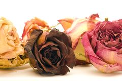 Close-up Dried Flowers. Dried multicolored flowers isolated on a white background Stock Image