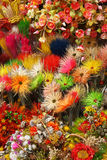 Close up of dried flowers. Along a street in a polish town Royalty Free Stock Photography