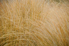 Close up dried grasses in forest, nature abstract background Stock Photo