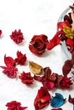 Close up on dried leaves and rose Royalty Free Stock Photo