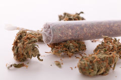 Close up of dried marijuana leaves and joint. Close up of dried marijuana leaves and tied end of marijuana joint with translucent rolling paper on white Stock Image