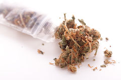 Close up Dried Marijuana Leaves on the Table Royalty Free Stock Photography