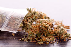 Close up Dried Marijuana Leaves on the Table Royalty Free Stock Photo