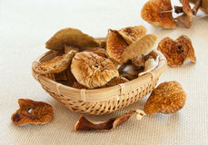 Close up of dried  mushrooms Stock Image