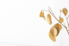 Close up of dried plant Stock Image