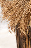 Close-up of dried rice paddy. In wood box Royalty Free Stock Photography