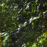 Close up dried seaweed Royalty Free Stock Photography