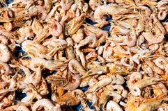 Close up on dried shrimps in the sun Stock Photo
