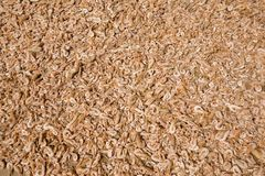 Close up on dried shrimps in the sun, Thailand Stock Images